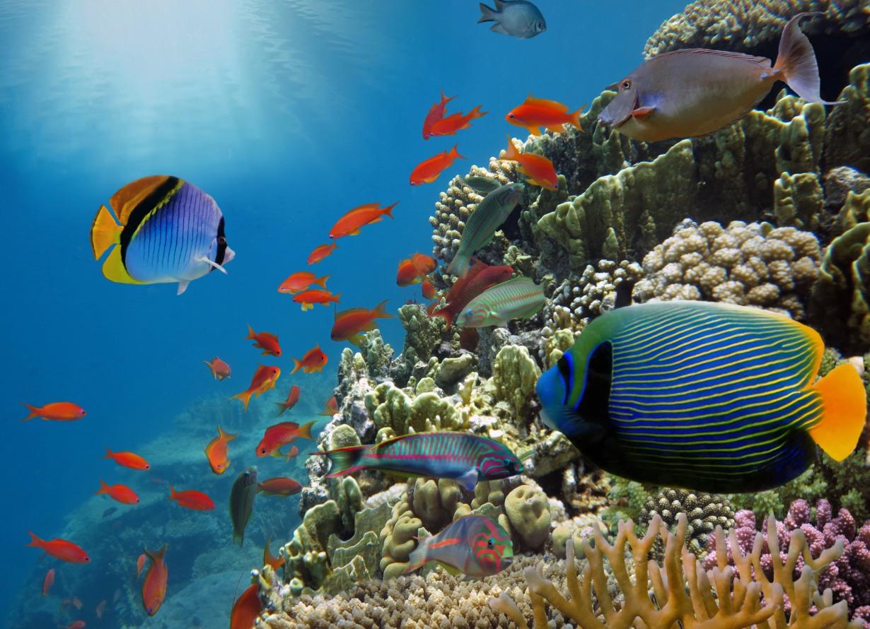 Foto subaquática e em detalhe de uma parede de corais com diversos peixes (crédito: vlad61 – iStock)