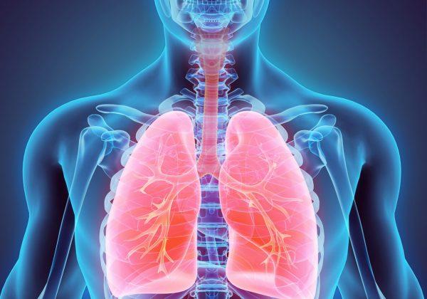 Desenho anatômico da caixa torácica de um corpo, com ossos e o pulmão em destaque.