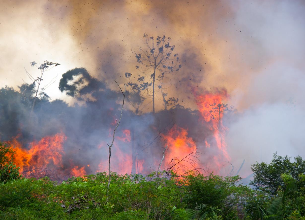 Foto de uma área de mata em chamas durante incêndio.