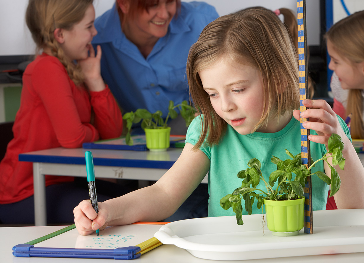 Foto de uma menina sentada em uma mesa escolar anotando informações em uma pequena lousa branca. Ao lado, há uma planta que ela mede com uma régua (crédito: omgimages – iStock)