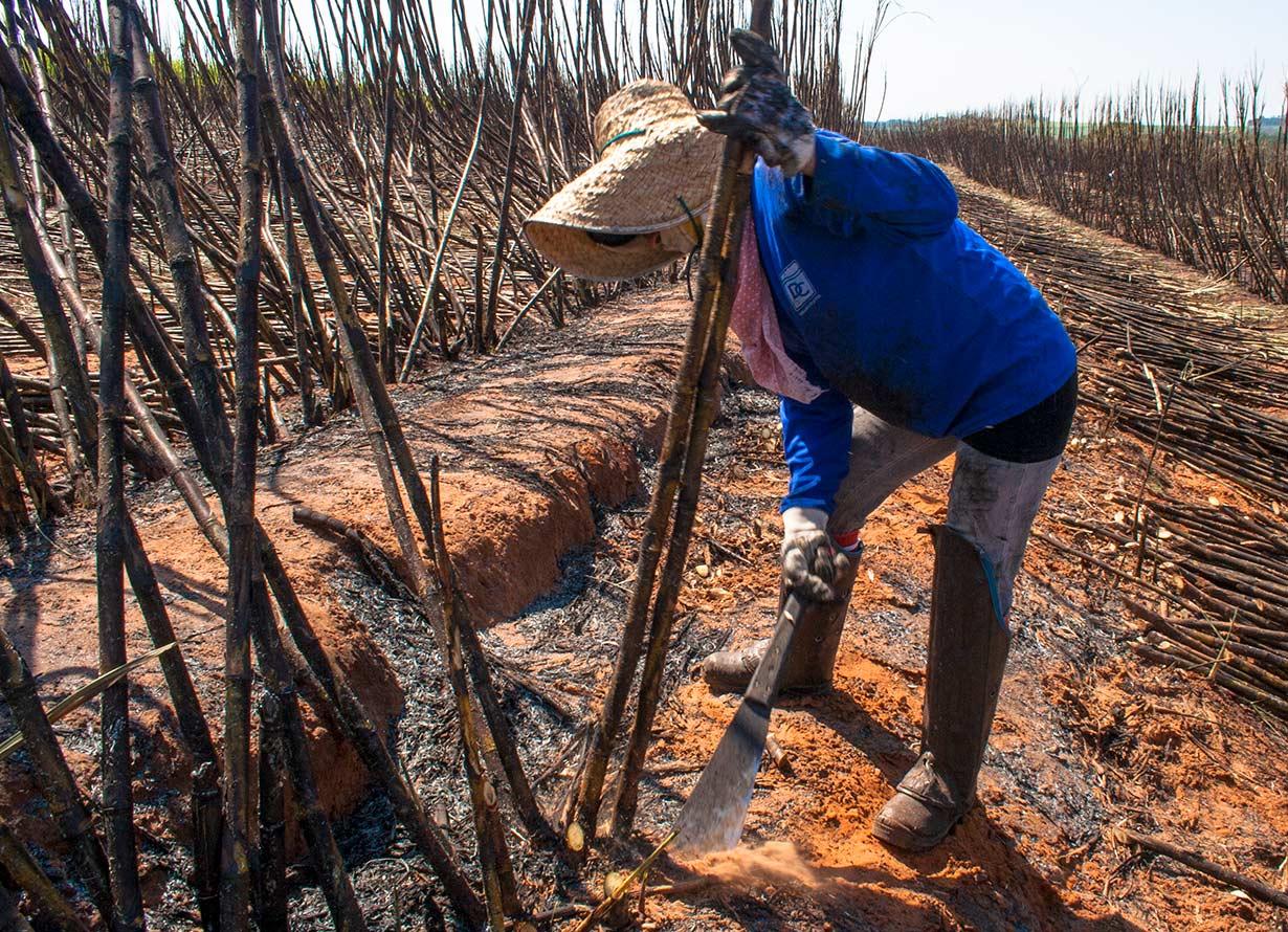 Foto em detalhe de pessoa cortando cana em um canavial (Crédito: Alfribeiro – iStock)
