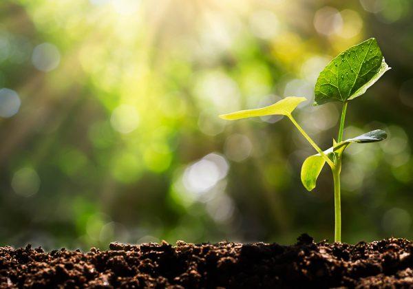 Foto com o fundo desfocado de uma planta crescendo na terra.