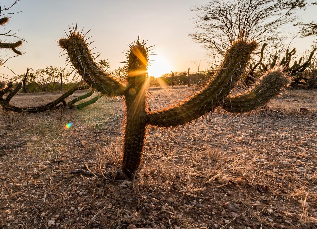 Foto em detalhe de cactos em uma planície seca