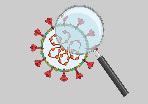 Arte com fundo cinza contendo o símbolo do coronavírus nas cores vermelho, verde e laranja. Sobre ele há uma lupa.